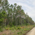 47.22 Acre Investment Tract thumbnail image