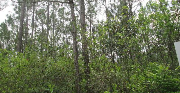 115.45 Acres of Pine and Volunteer Woodlands image