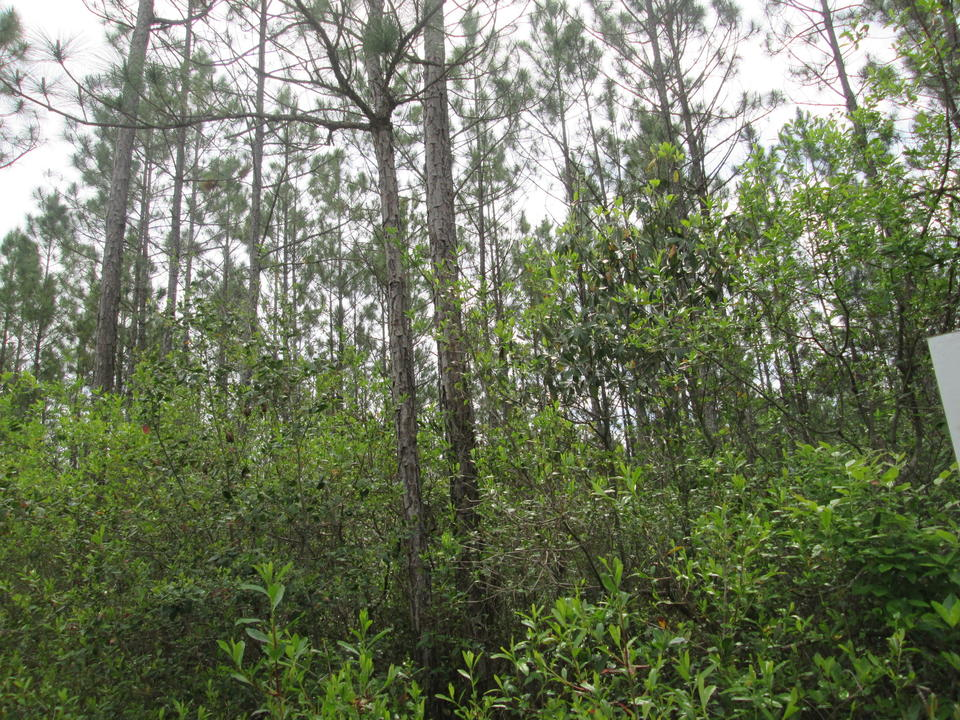 102.87 Acres with 60 Acres of 1 Year Old Pine and Volunteer Woodlands- Only $1,150 per acre main image