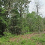 115.45 Acres of Pine and Volunteer Woodlands thumbnail image