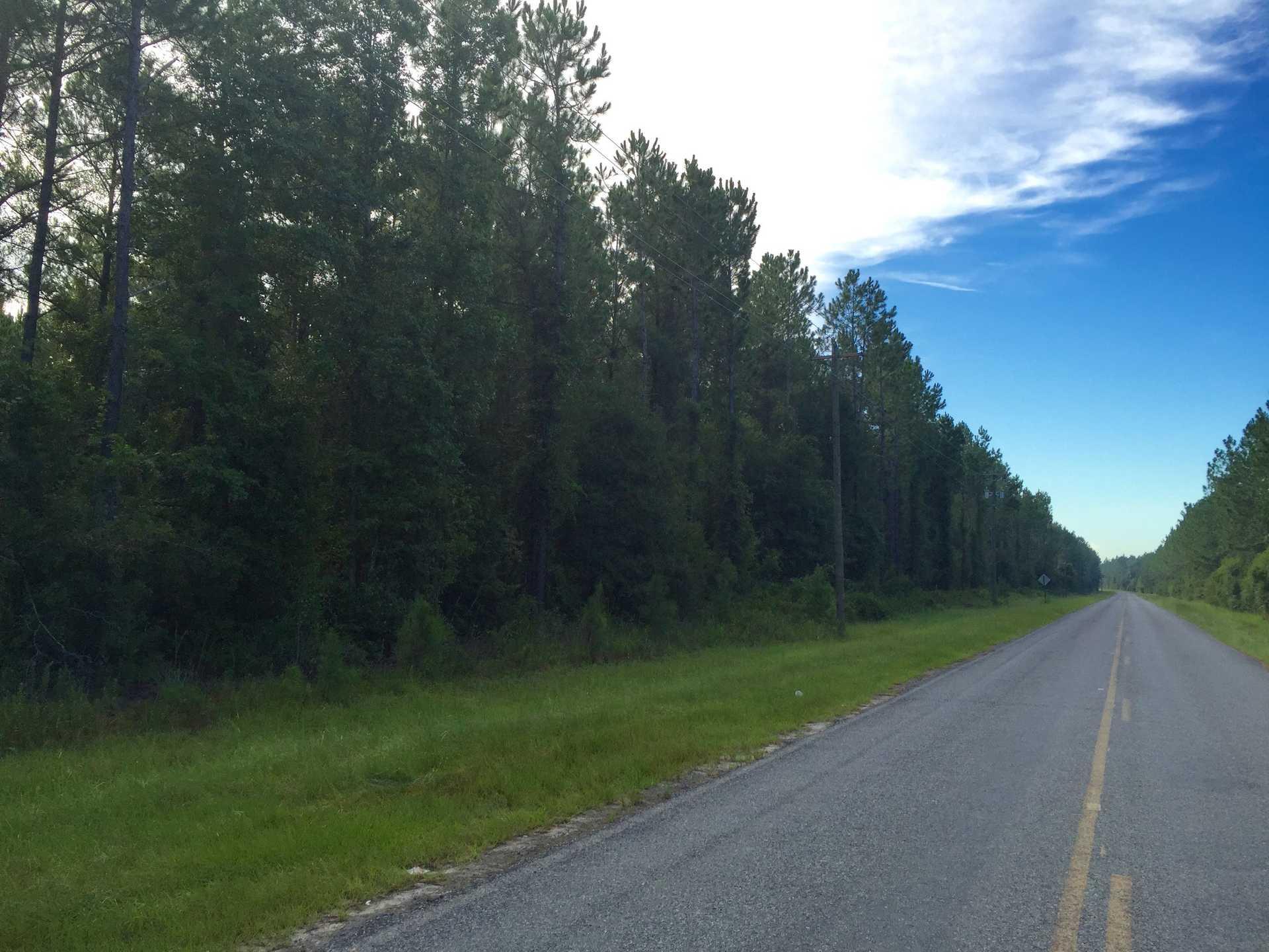 35 Acre Pristine Pine Plantation image