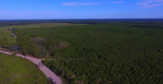 144 Acre Investment and Hunting Tract image