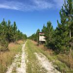 144 Acre Investment and Hunting Tract thumbnail image