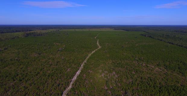 145 Acre Pine Planation image