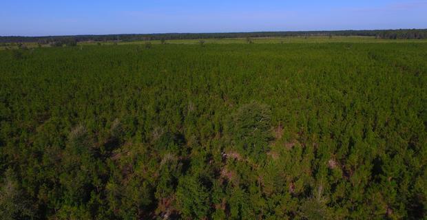 290 Acre Investment Plantation image