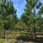 290 Acre Investment Plantation thumbnail image