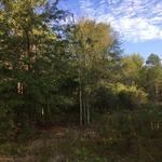 14.47 Acres Toombs County thumbnail image