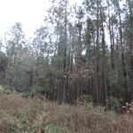 Concord Road 5 Acres thumbnail image