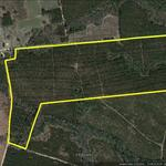 66 ac of Timberland in Bacon County thumbnail image