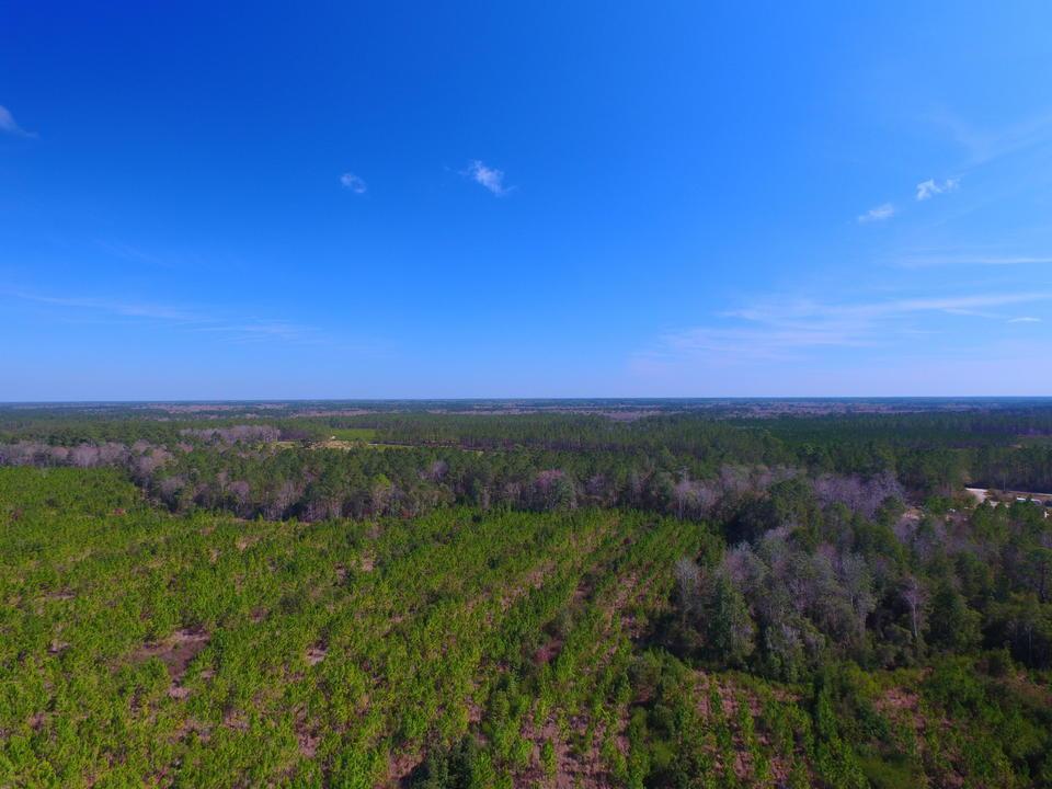 53 Acre Pine Plantation main image