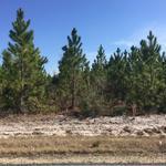 53 Acre Pine Plantation thumbnail image