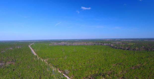 93.67 Acre Pine Plantation image