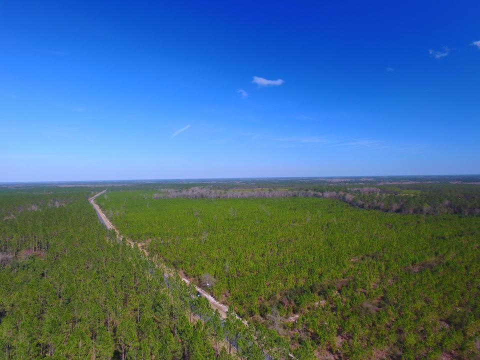 93.67 Acre Pine Plantation main image