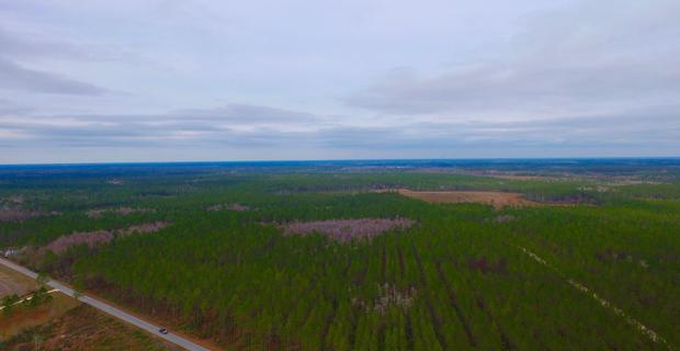 104 Acre Timberland Tract image