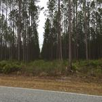 104 Acre Timberland Tract thumbnail image