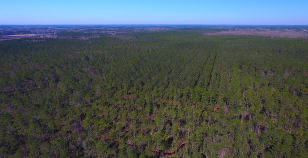 175 acres Timberland Investment Tract image