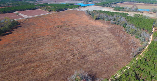 70 Acres Bacon County image