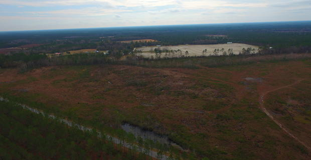30 Acres Cutover Land image
