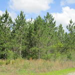 102 Acre Timberland Investment thumbnail image