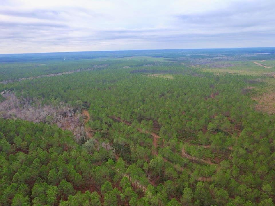 243 Acre Timberland and Hunting Paradise image