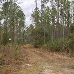 243 Acre Timberland and Hunting Paradise thumbnail image