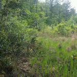 Pine, Hardwood, Abundant Wildlife in Coastal Georgia thumbnail image