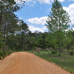 137 Acres Perfect for Investment or Recreation thumbnail image