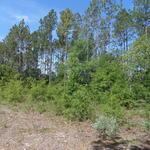 Mill Creek Lane thumbnail image