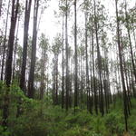 Investment Tract in Millwood Plantation Offers Options thumbnail image