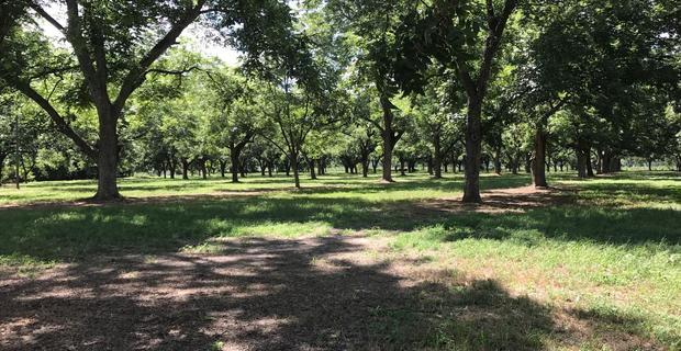 Beautiful Homesite with Old Growth Pecan Orchard image