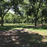 Beautiful Homesite with Old Growth Pecan Orchard thumbnail image