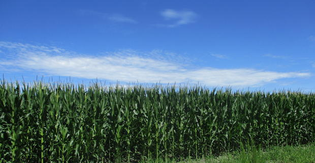 Great Gentleman Farm in Pierce County image