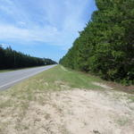 Louisiana Sand Hill thumbnail image