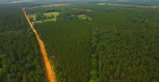 Beautiful Investment Tract in Laurens County image