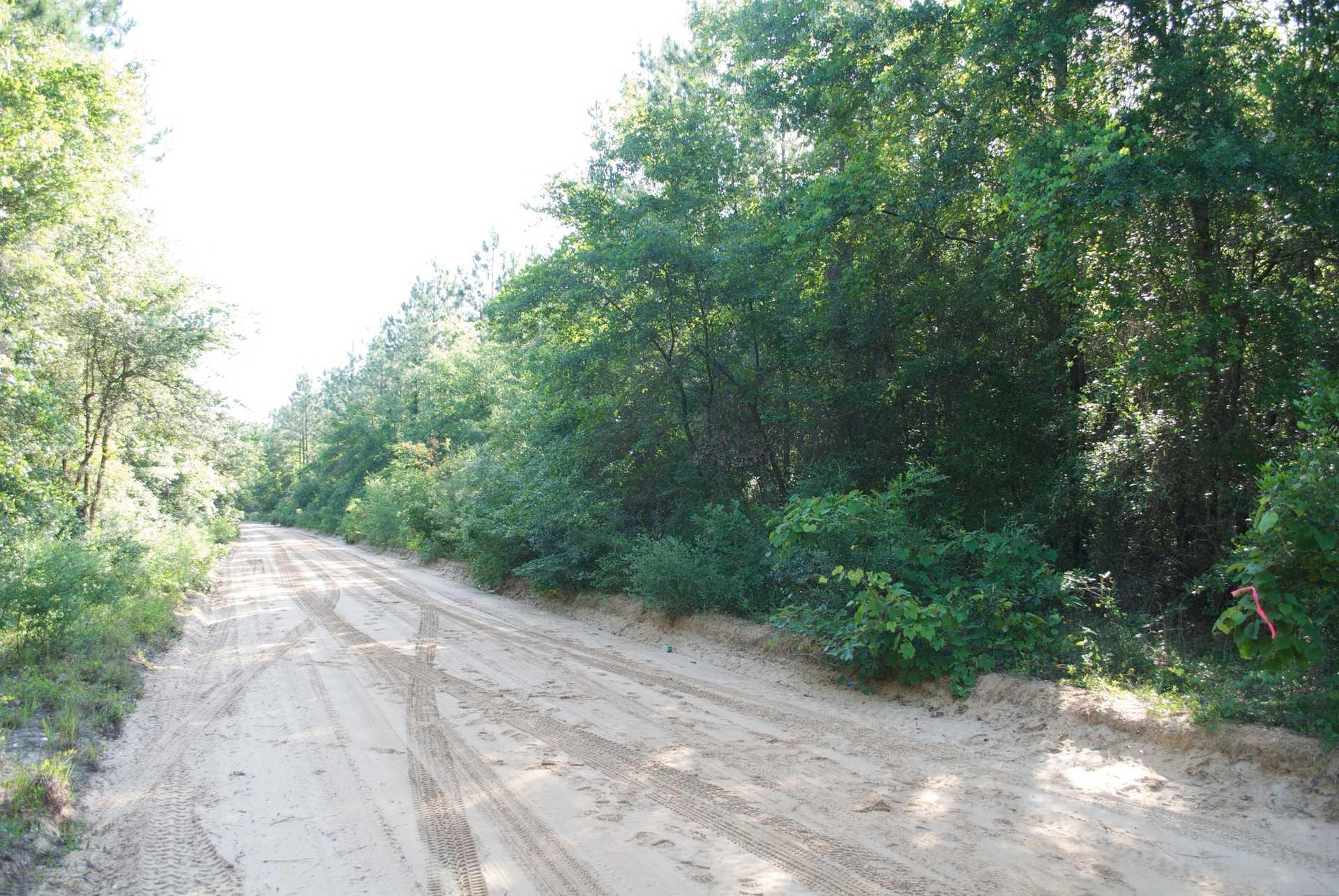 Homesite With McIntosh Creek Frontage image