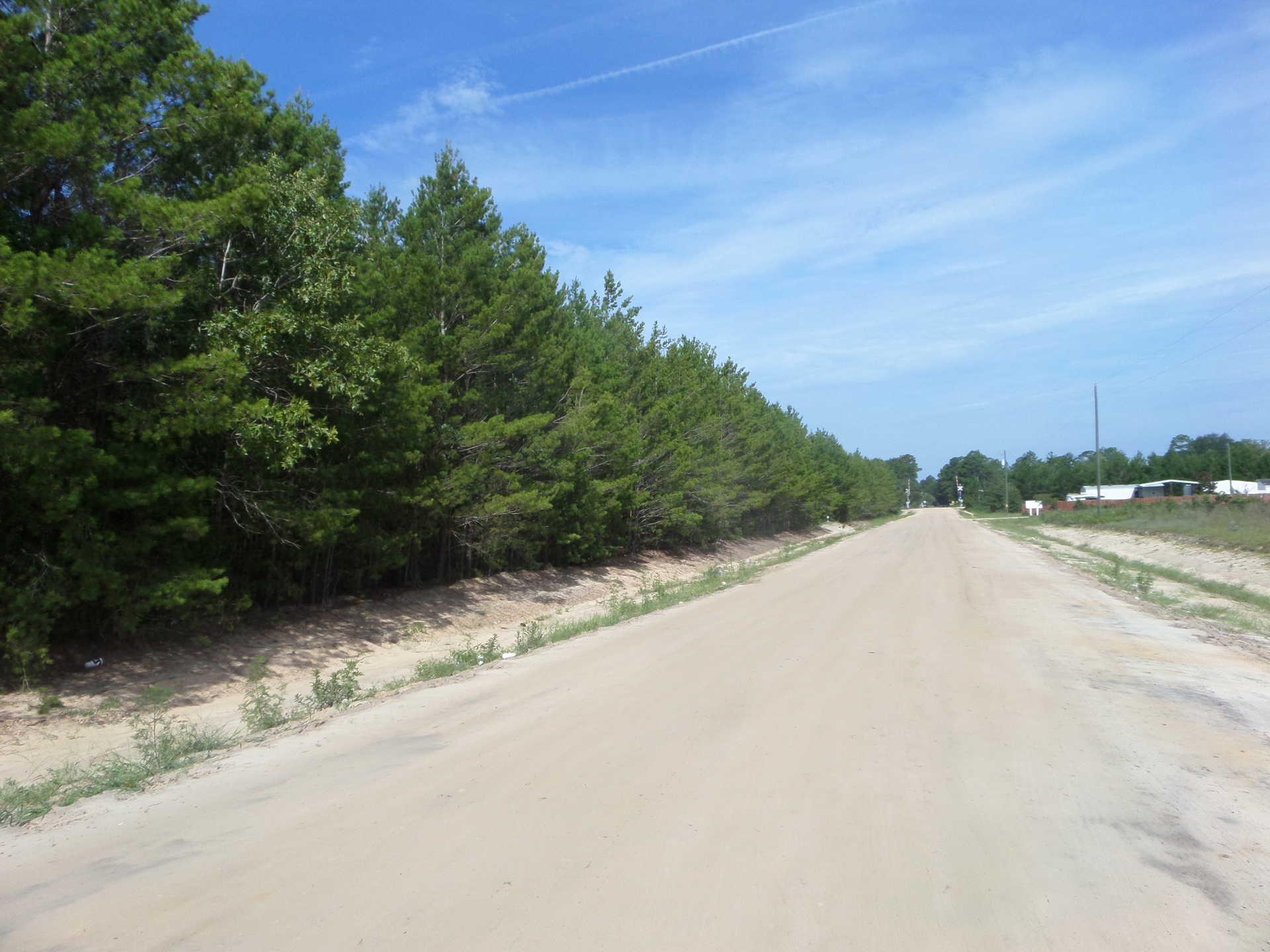 Louisiana Sand Hill Tract 1 image