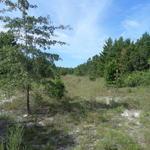 Louisiana Sand Hill Tract 1 thumbnail image