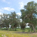 Timberland Tract in Toombs County thumbnail image