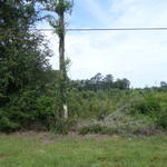 Nice Rural Homesite on Little Creek/Gardi Rd thumbnail image
