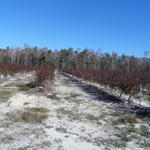 Beautiful Blueberry Farm and Timberland Investment thumbnail image