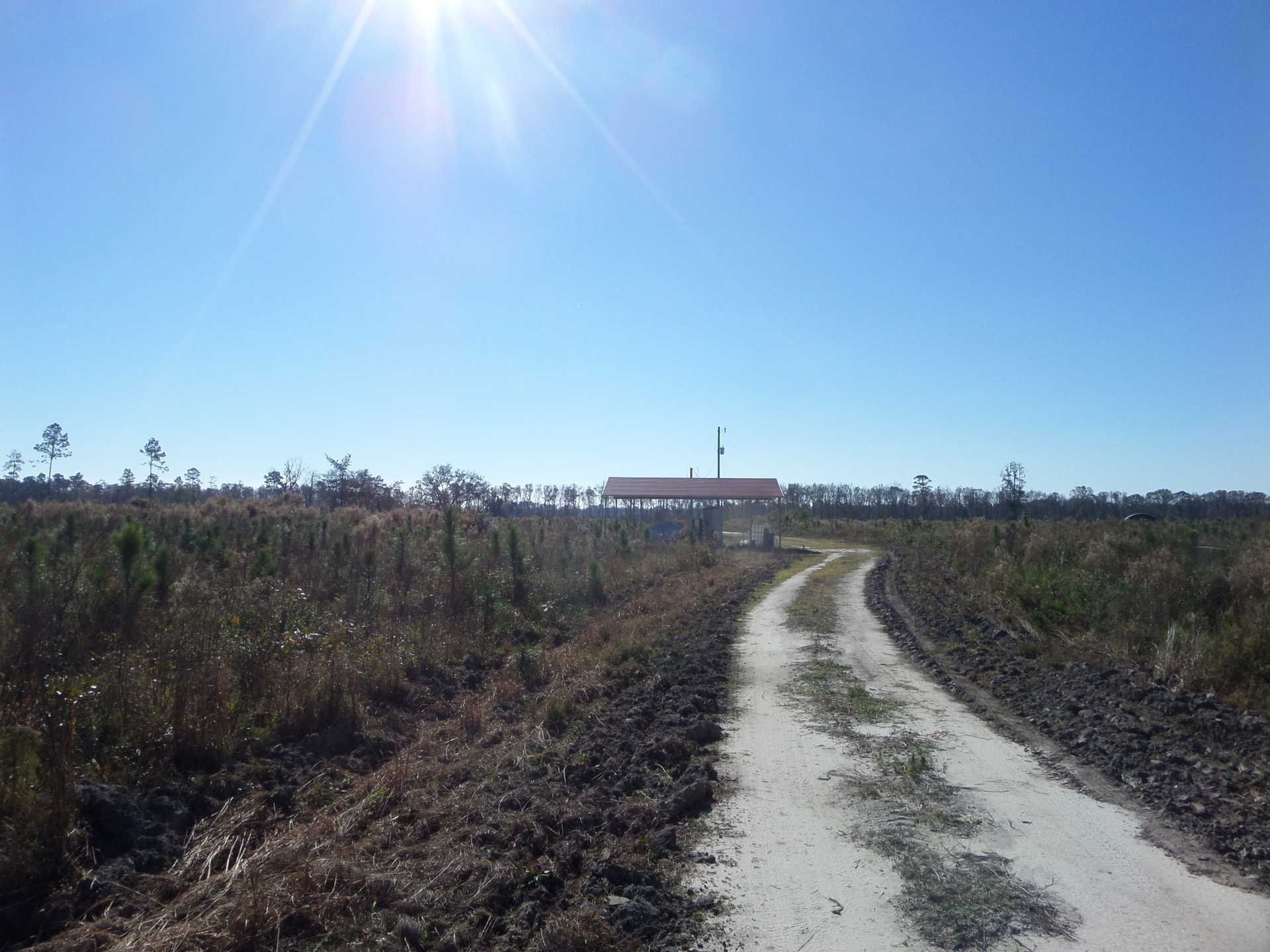 Beautiful Blueberry Farm and Timberland Investment image