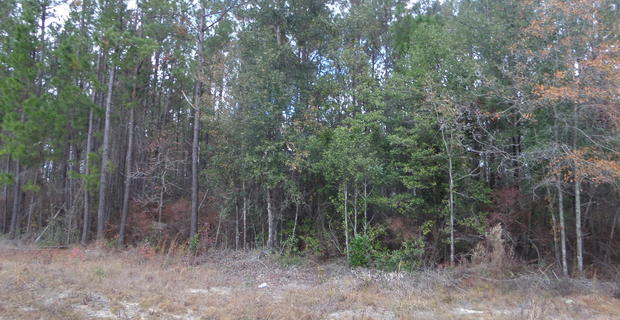 GOOSE CREEK BLUFF LOT 14 image
