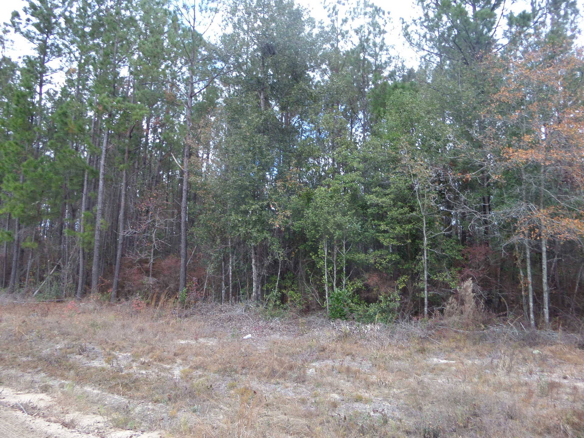 Waterfront Lot on Goose Creek image