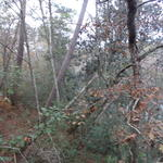GOOSE CREEK BLUFF LOT 14 thumbnail image