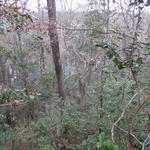 Waterfront Lot on Goose Creek thumbnail image
