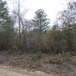 Nice Homesite with Bluff Road Frontage thumbnail image