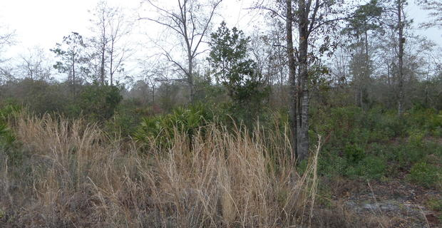 Homesite on Boots Harrison Rd image