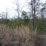 3 ACRE TRACT BOOTS HARRISON ROAD thumbnail image