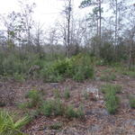 Homesite on Boots Harrison Rd thumbnail image