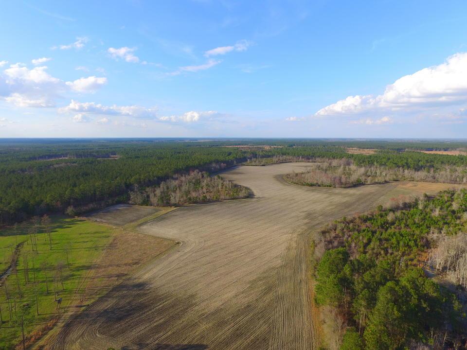 95 Acre Farm Alma, GA main image